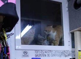 Gatos tienda intervenida
