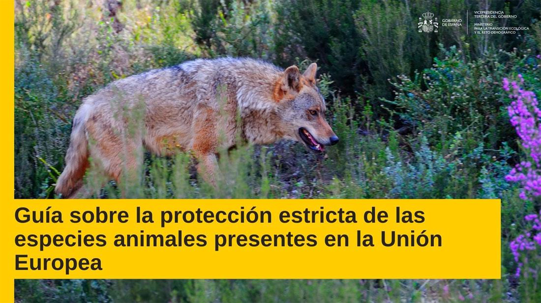 Guía para la protección estricta de especies animales de la Comisión Europea