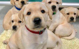 Los cachorros están biológicamente preparados para comunicarse