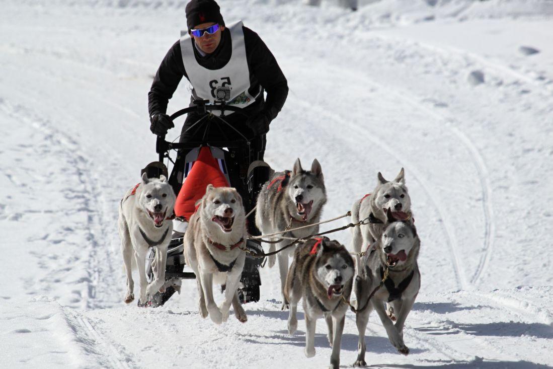 Carrera Iditarod