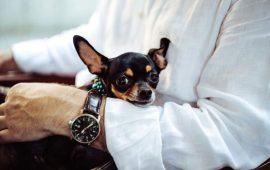 Con motivo del Día Internacional de las Personas de Edad, la RSCE recomienda a los mayores las razas caninas más pequeñas y fáciles de cuidar