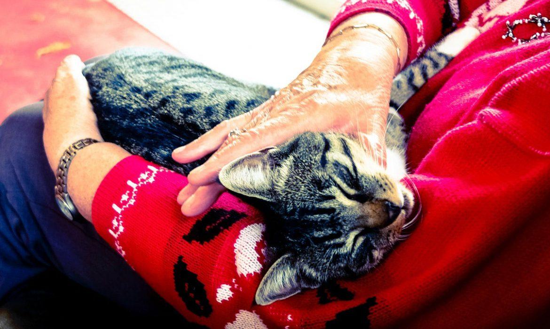 """Nace """"Mayores y Mininos. Adopta un Gato"""""""