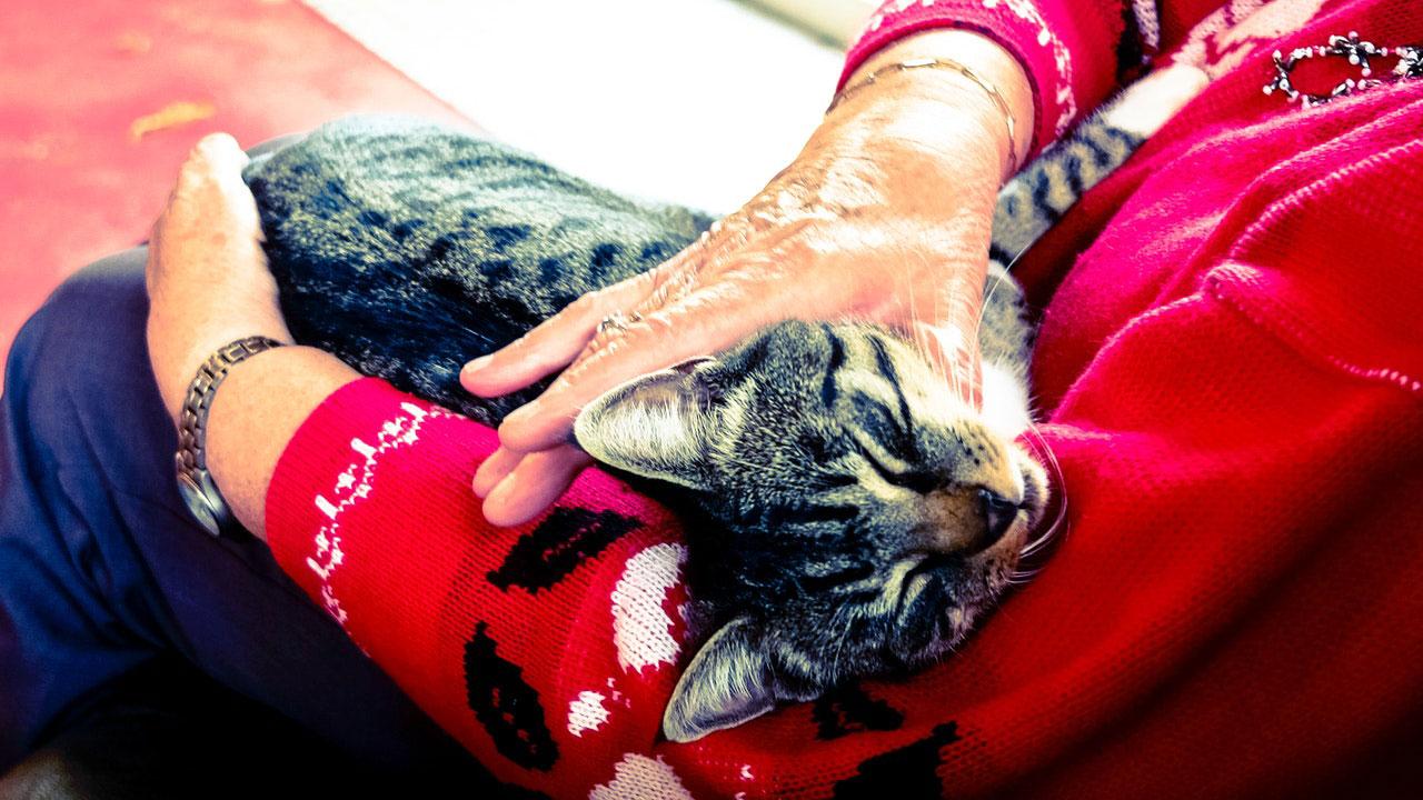 Gato con persona mayor
