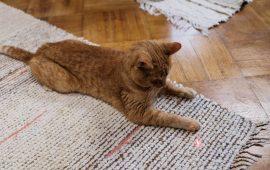 El uso de punteros láser para jugar con gatos es inadecuado