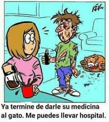 Medicación gato