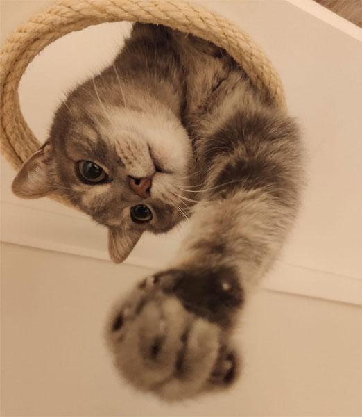 Muebles gatos