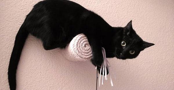 Muebles gatos - catificacion