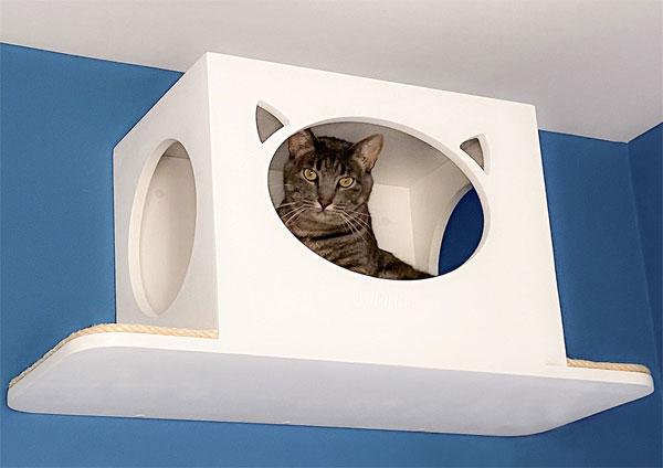Casas de gatos en las alturas