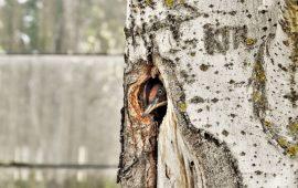 El trabajo de los pájaros carpinteros incrementa la biodiversidad de los parques urbanos