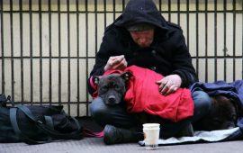 Las personas sin hogar que tienen mascotas están tan sanas como las del resto