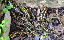 Piden medidas para la eliminación de muertes de fauna en un aljibe de Benamahoma