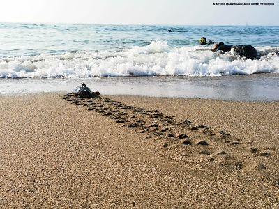 Suelta tortugas