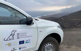 Transición Ecológica activa un protocolo de búsqueda y detección de veneno en Cofete (Canarias)